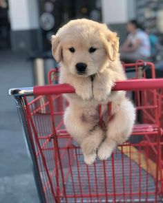 Featuring cute dogs and puppies from all around the world. Watch funny dog pictures, see cute puppy pictures and more! Baby Animals Super Cute, Super Cute Puppies, Cute Little Puppies, Cute Dogs And Puppies, Cute Funny Animals, Bulldog Puppies, Doggies, Cute Pets, Puppies Puppies
