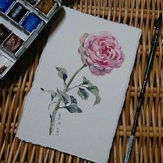 Sampling the Sennelier paper  #watercolor #rose #minirose #flowers #art #artist #paint #painting #sketch #doodle #sennelier #aquarelle #水彩