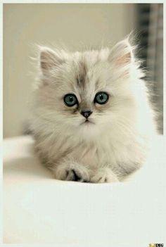 Beautiful. Trop mimi