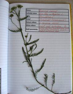 Výsledek obrázku pro herbář