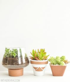 DIY Leather Wrapped Planters