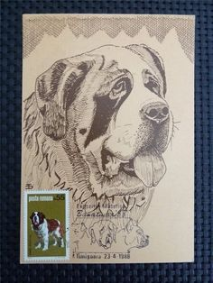ROMANIA MK HUNDE BERNHARDINER HUND DOG MAXIMUMKARTE MAXIMUM CARD MC CM c4855