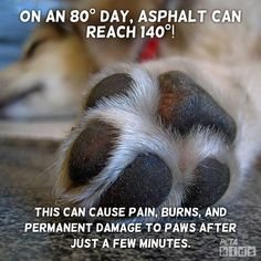 Summer's here: Make sure to protect your canine companions from the heat! #compassion #teachkindness #toohotforspot