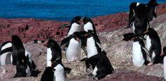 Con grandes expectativas se produjo recientemente el inicio de temporada 2014-2015 en la ciudad de Puerto Deseado. Penguins, Animals, Santa Cruz, Great Expectations, Glow, Seasons, Tourism, Cities, Animais