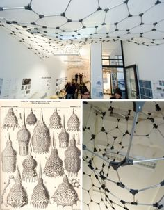 ocean-biomimicry-structural-skeletons-marine http://www.radiolaria-project.de/indexFlash.html