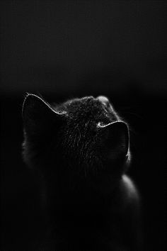 * *> Yet, mad I am not. And very surely, I do not dream. [Edgar Allen Poe -The Black Cat I Love Cats, Big Cats, Cats And Kittens, Cute Cats, Photo Animaliere, Photo Chat, Beautiful Cats, Animals Beautiful, Cute Animals