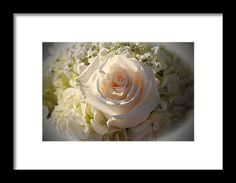 Rose Framed Print featuring the photograph Elegant White Roses by Cynthia Guinn