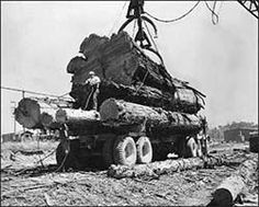 How about a thread for posting our logging equipment 'in action' pictures? Vintage Pictures, Old Pictures, Photos Du, Old Photos, Action Pictures, Logging Equipment, Forest Service, Environmentalist, Big Tree