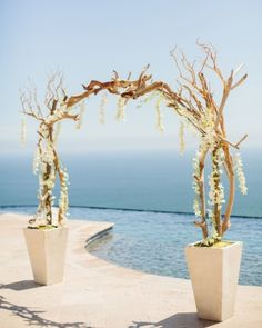 Wedding Arch: An arch of driftwood and dendrobium orchids, built just feet from the water, provided a picturesque backdrop