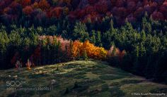 Trees in the light by hanskrusephotography. Please Like http://fb.me/go4photos and Follow @go4fotos Thank You. :-)