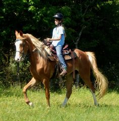 Tennessee Walking Horses -- CLOUD 9 WALKERS - Tennessee Walking Horses For Sale
