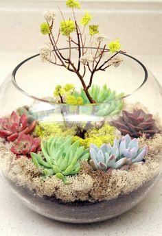 Hübsches Terrarium mit bunten Sukkulenten