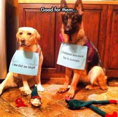 these dogs shouldn't be shamed, they should awarded treats for dealing with that creepy thing