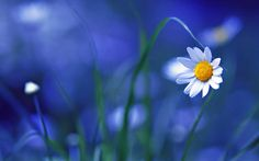 maravilhosas flores - Pesquisa Google