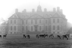 Oh deer! Belton House, Britain.