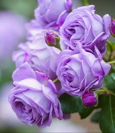 Roman Reigns Family, Good Morning Greetings, Floral Patterns, Plants, Cute Images, Flower Wallpaper, Peonies, Planting Flowers, Favorite Color