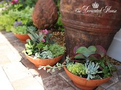 The Decorated House: ~  How to Create a Succulent Dish Garden ~ Tutorial. Step by Step Instructions.