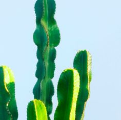 Love the light on this Cactus.