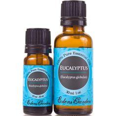 Top 8 Uses Of Eucalyptus Oil