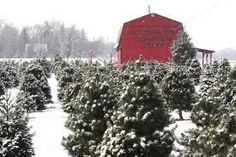 Ohio Winter Fun: Christmas Tree Farms #barnpros #barns #barn #prefabbarns #barnhomes #barnkits #barnswithapartments #barnbuilding #barnhouses #barnkit Prefab Barns, Barn Kits, Christmas Tree Farm, Winter Fun, Farms, Ohio, Outdoor, Outdoors, Pole Barn House Kits