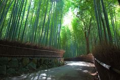 嵯峨野・竹林の道  Sagano bamboo forest, Arashiyama, Kyoto, Japan