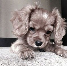 Cute Dogs And Puppies Images among Really Cute Animals Gif nor Cute Animals At The Zoo & How To Draw Cute Kawaii Animals From Squares Cute Kittens, Fluffy Kittens, Cute Baby Animals, Animals And Pets, Funny Animals, Wild Animals, Funny Dogs, Funny Puppies, Nature Animals