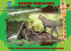 Come to the land of opulence, India and explore the exotic and quixotic wildlife in the country with exclusive wildlife tours in India