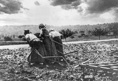 Women At Work in 1917 - The Atlantic- Women pull farm equipment in a field during World War I, in Oise, France, in 1917