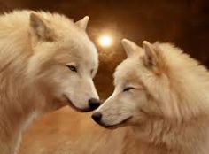White Wolves - Use an image of a Wolf to inspire and conjure Protective Powers, or when you need help to repel Evil. Wolf Totem, Beautiful Creatures, Animals Beautiful, Cute Animals, Wolf Spirit, Spirit Animal, Wolf Hybrid, Wolf Husky, Wolf Pup