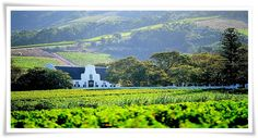 Capetown has so much to offer, but it is a little known fact that just 30 minutes out of Capetown lies one of the largest grape growing regions in South Africa. This lush and fertile region produces enough grapes to produce wines...
