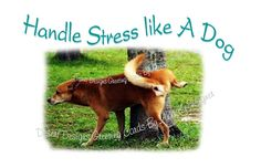 Handle Stress Like A Dog Adult Humorous by AnnKayGreetingCards, $5.50