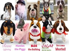 Win a $150.00 Petsie Blox the Bulldog, Hamlet the Piggy, Oscar the Mini Frenchie, Reese Lightning the Miniature Dachshund and Meatball the Dachshund plush animals. These pet stars have taken the world by storm!