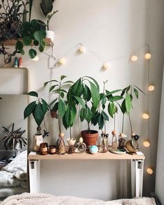 I've got a lov-ely bunch of avocado plants, there they are growing in a row 🥑. - Home/Apartment Edition - Avocado Interior Design Colleges, Uo Home, Feng Shui, Plant Wall, Holiday Gift Guide, Indoor Plants, Indoor Gardening, Fake Plants, House Plants