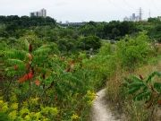 Trails around Toronto