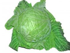 Picture of a cabbage - a green leafy vegetable