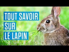 Tout savoir sur le lapin - YouTube