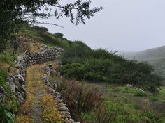 Hiking routes | Official Site Turism in La Gomera