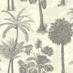 Sophie Conran Coconut Grove Wallcoverings Feather 950609
