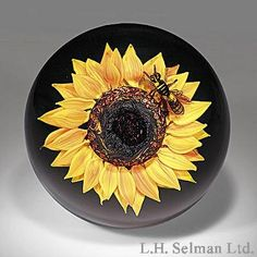 Rick Ayotte sunflower and hornet paperweight, with the insect resting on the edge of an upright golden-yellow flower, over translucent green ground