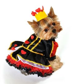 Adorable! Two piece royal queen of hearts dog costume, includes tiered lace trim dress with red heart accents, attached petticoat and heart crown. Easy to wear front closure.