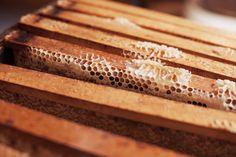 The Crackers Blog on Honey.