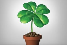 Creating Luck! (and Tools to Help) - OMTimes Magazine
