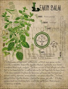 Book of Shadows Printable pages of Herbs Witchcraft Herbal Grimoire BOS Sheets Magic Potion Spell Ingredient Green Witch Herbarium 6 Wiccan, Magick, Magic Herbs, Herbal Magic, Plant Magic, Witchcraft Books, Green Witchcraft, Witchcraft Herbs, Witch Herbs