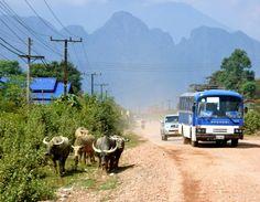 Vang Vieng waterbuffels weg