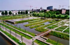 i love Westerpark, amsterdam