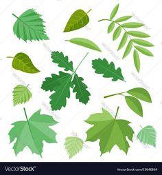 Collection of green leaves. Vector, illustration in flat style isolated on white background EPS10. Download a Free Preview or High Quality Adobe Illustrator Ai, EPS, PDF and High Resolution JPEG versions.