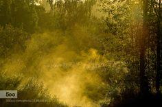 Morning Comes to the Lowlands - Pinned by Mak Khalaf Landscapes foglandscapesunrisetrees by gregandrascik