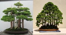 15 Beautiful Bonsai Forests – TwistedSifter