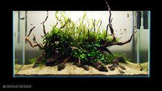 Home Aquarium, Nature Aquarium, Aquarium Design, Aquarium Fish Tank, Aquascaping, Planted Aquarium, Colorful Fish, Tropical Fish, Nano Cube