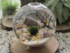 Sommer-Deko-Idee-Muschel-Terrarium-selber-machen